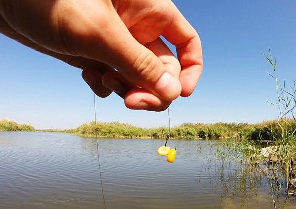 рыбалка на гигантскую кукурузу