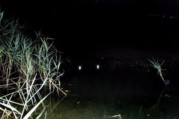 линь ночью