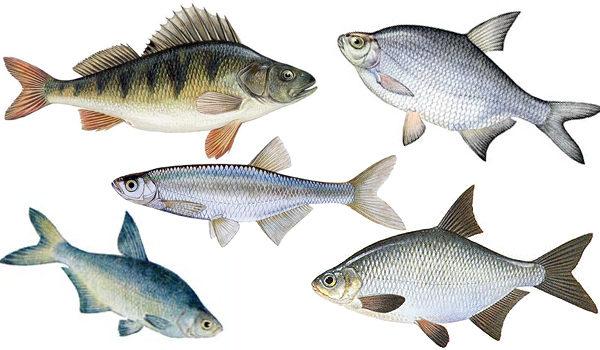 Объекты безмотыльной рыбалки