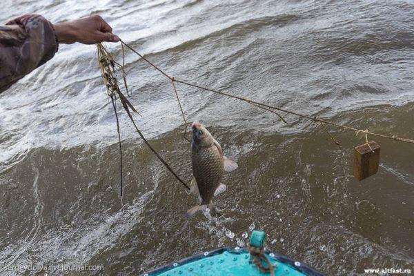 перемет с рыбой