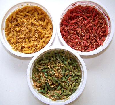 разноцветные опарыши