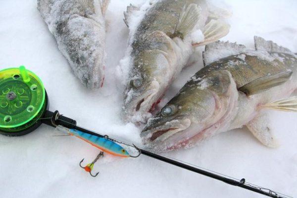 судак зимой на льду