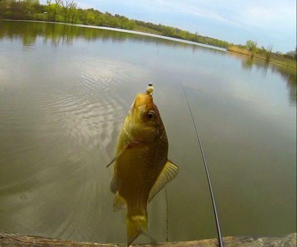 когда начинают рыбалку на карася весной