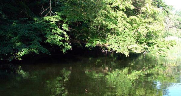 Нависшие деревья над водой
