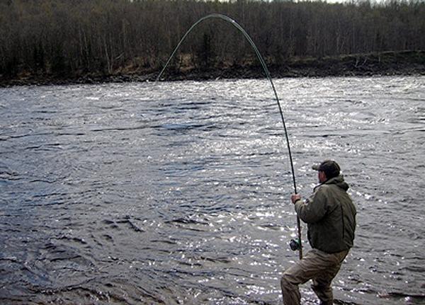 какая рыба клюет зимой при высоком давлении