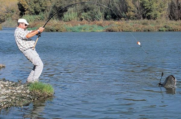 ловить сома осенью
