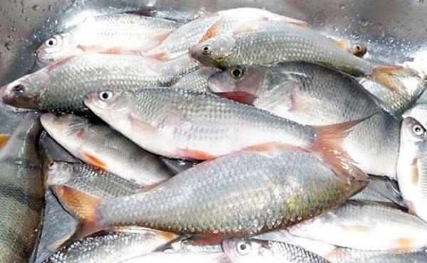 рыбалка видео на цимлянском водохранилище