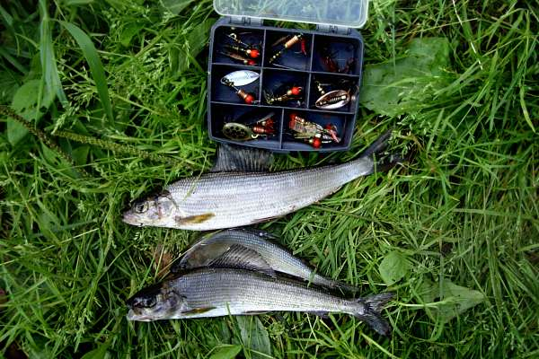 все о рыбалке весной летом хариус