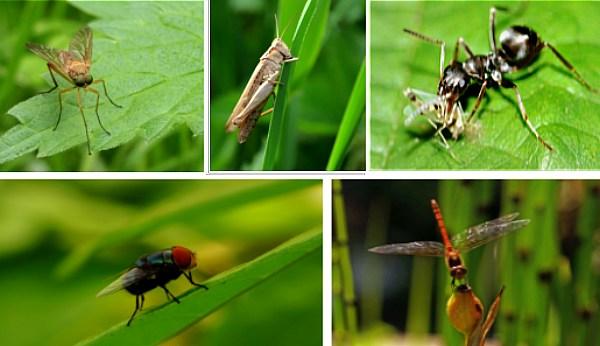 приманки насекомые
