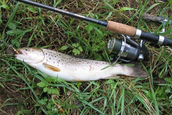 рыбалка озеро сенеж бесплатно