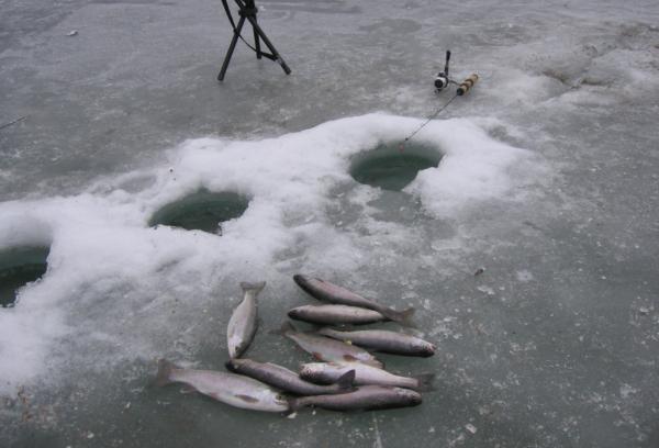 ловля форели зимой на платниках