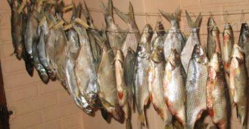 рыбу на вяление