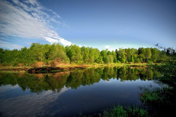 плотва в реке