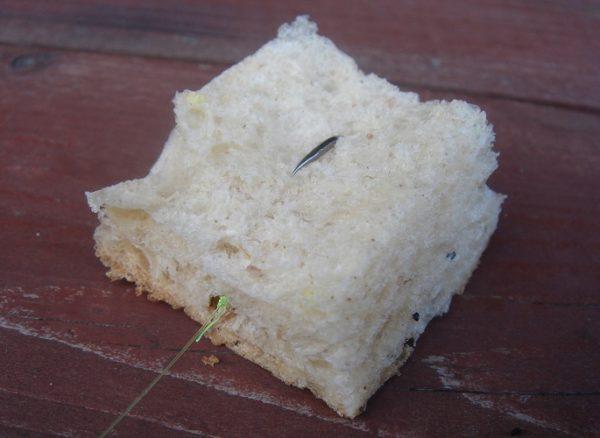 хлебная корка