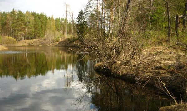 Ловля налима осенью: снасти, монтажи и тактика рыбалки