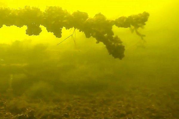 икра под водой
