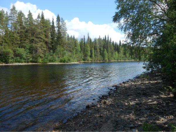 поворот реки