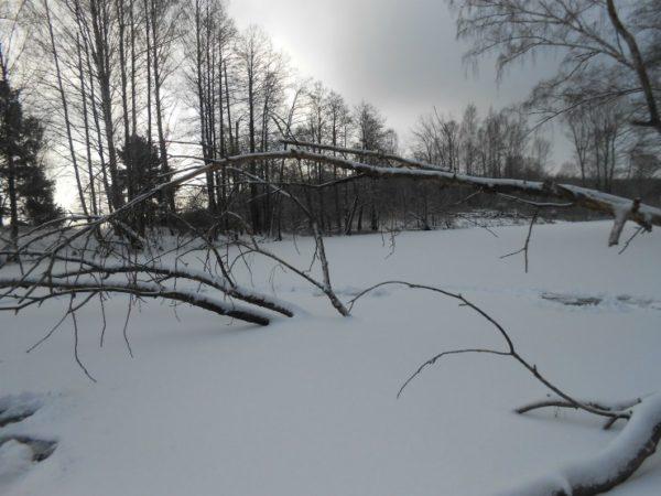 деревья вмерзшие в лед