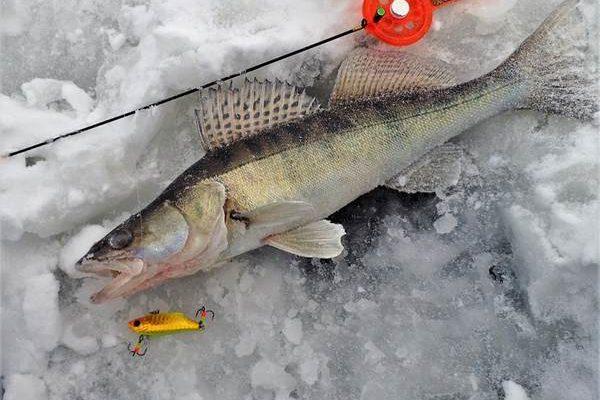ратлин для зимней рыбалки