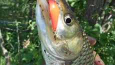Glisser от SV Fishing Lures